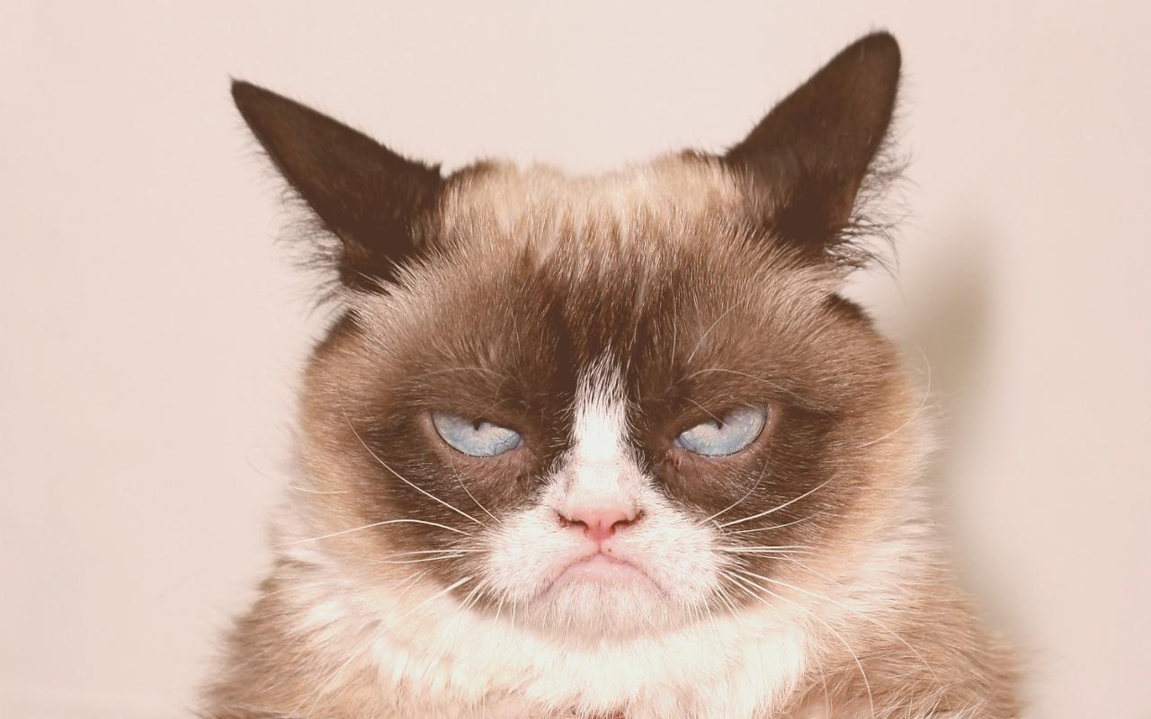 Miao, le gif funzionano su tutte le pagine Facebook